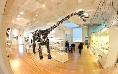 Dinosaur at New Walk Museum and Art Gallery